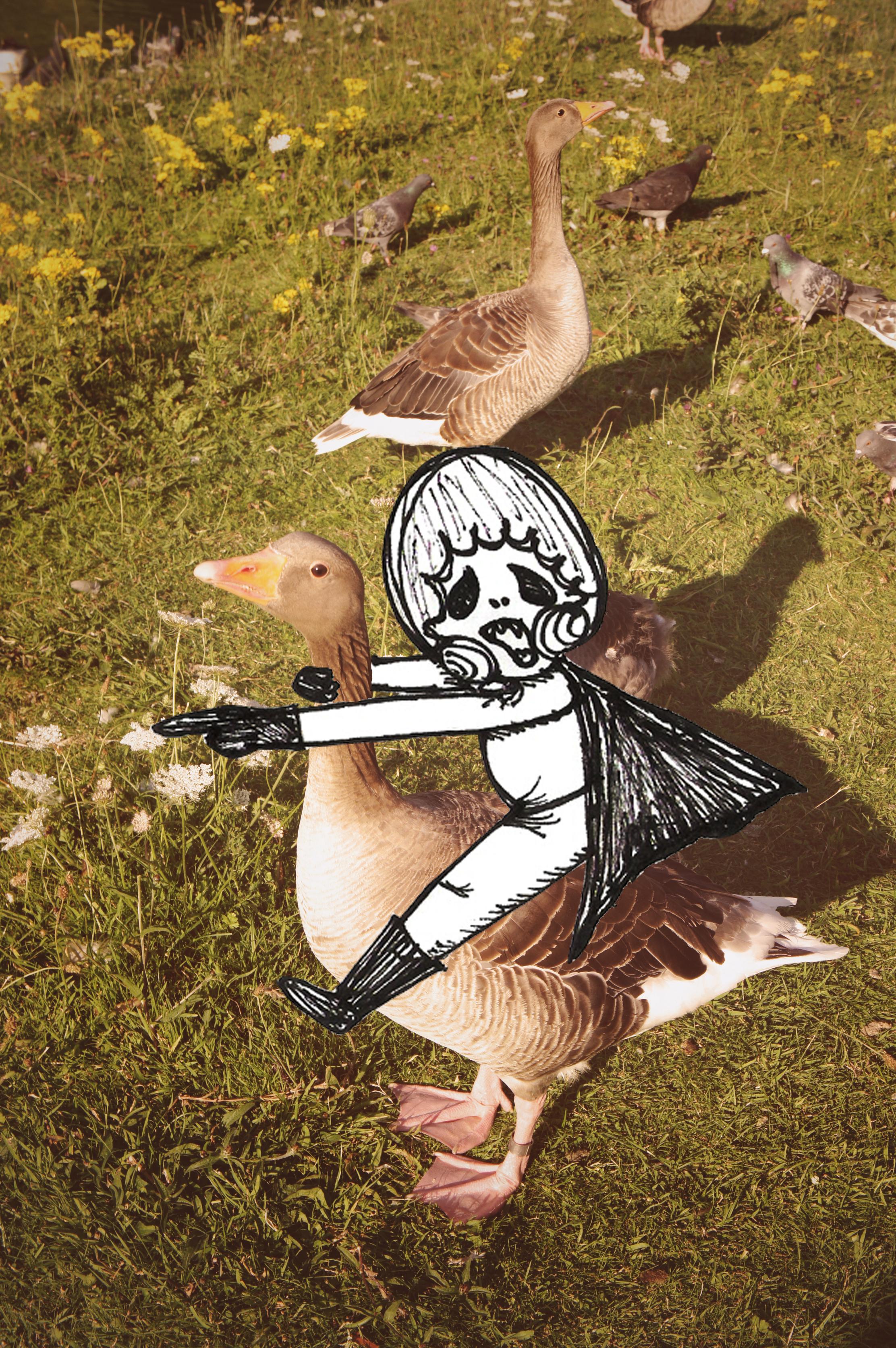 mixing_duck.jpg